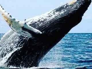 1597762479-avistagem-de-baleias-jubartes.jpg