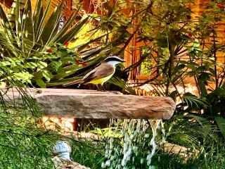1559583189-pousada-em-rio-de-contas-chale-especial-passarinhos.jpg