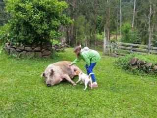 1606593492-pousada-rural-em-urubici-arroio-da-serra-porco.jpg